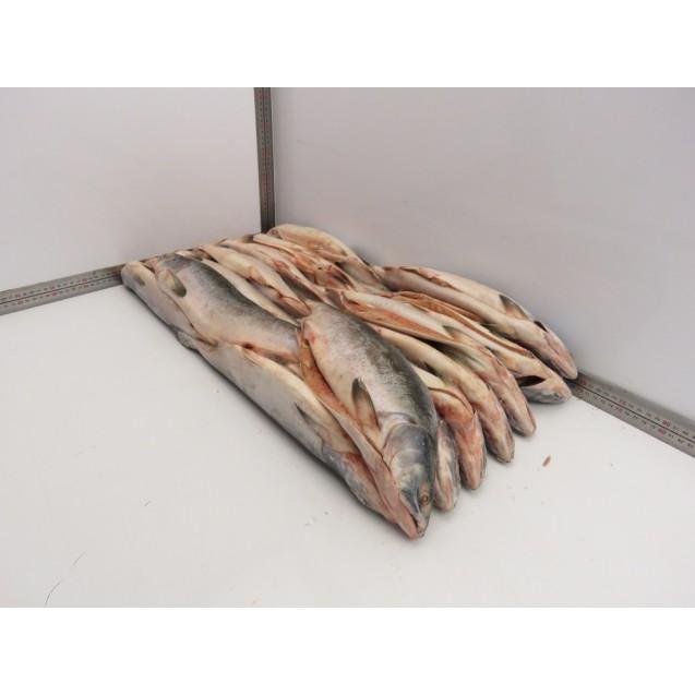 Горбуша потрошенная с головой, серебро, штучной заморозки,  изготовлена в море, Дальний Восток, 1 кг