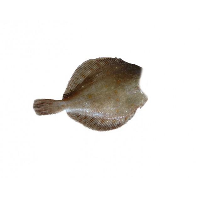 Камбала без головы 500-1000, потрошенная, Мурманск, 1кг