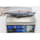 Молочная рыба целая (500 - 800 гр.), штучной заморозки, Индонезия, 1кг