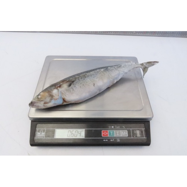 Скумбрия неразделанная (300-500 гр.), изготовлена в море (Валаастро) Аргентина, 1кг
